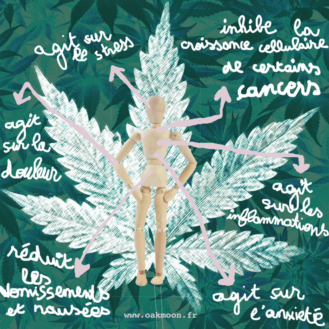 effets des cannabinoides